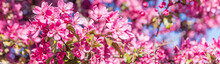 Abstract Colorful Pink Flowers Background