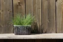 Leeks Seedlings Growing In Pla...