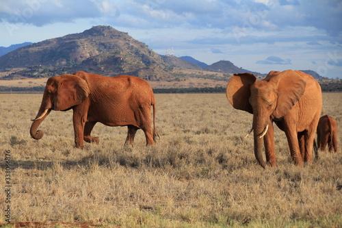 Park Narodowy Tsavo East w Kenii słonie