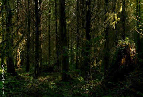 Photographie Trees In Forest