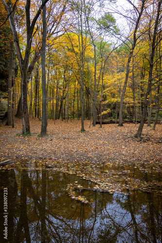 Fototapeta Autumn/fall colors in Illinois canyon.  Starved Rock state park, Illinois, USA obraz na płótnie