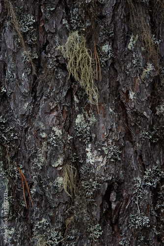 Photo Macrophotography. Moss and lichen.