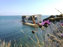 Close-up Of Purple Flowering P...
