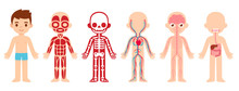 Anatomy Child Cartoon Illustration