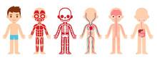 Anatomy Child Cartoon Illustra...