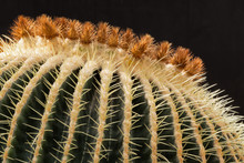 Close Up Of A Golden Barrel Cactus