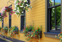 Blooming Flowers Decorative Ha...
