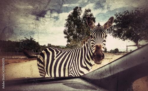 Zebra Against Sky Seen Through Car Windshield