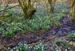 green, natur, blume, frühling, pflanze, gras, feld, wiese, weiß, garden, sommer, blatt, flora, aufblühen, wald, frisch, wild, lawn, blühen, jahreszeit, baum, landschaft, floral, frühlingsknotenblume,