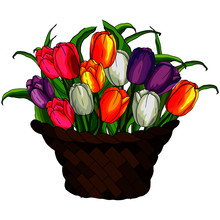 Vector Illustrations, Tulip Fl...