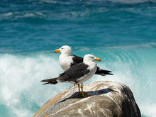 Two Gulls On A Rock With The Ocean Behind Them