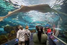 The Ripley Aquarium Is A Popul...