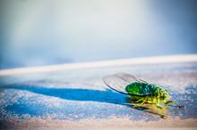 Close-up Of Cicada Outdoors