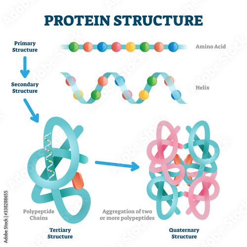 Protein structure vector illustration Canvas Print
