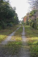 Hiking Hammock Trails In Florida