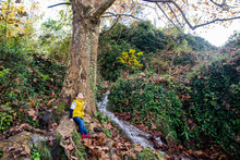 Boy Sitting On Root Of Large Tree In Forest