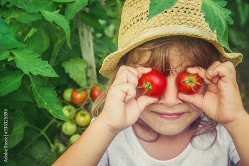 Fényképezés A child in a garden with tomatoes. Selective focus.