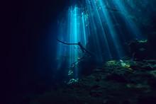 Landscape Diving In Cenote, Un...