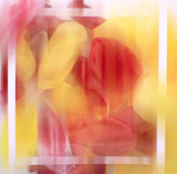 blurred background flower petals / bright abstract background nature, spring
