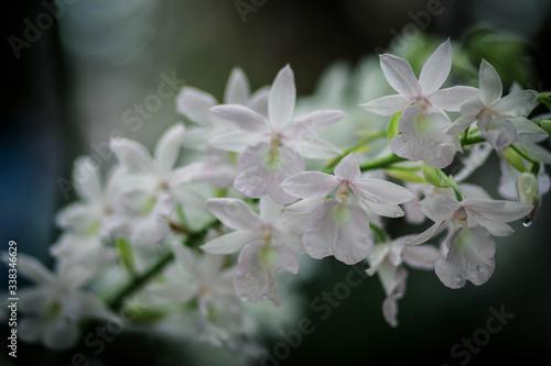 Fototapeta Close-up Of White Flowering Plant obraz na płótnie