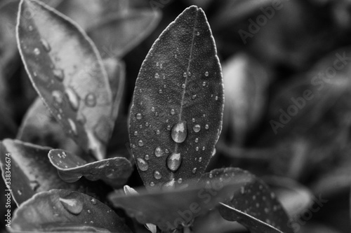 Papel de parede Close-up Of Raindrops On Leaves