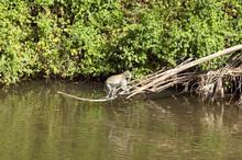 Monkey Above Water In Nairobi ...