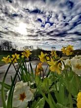 Spring Flowers Underneath Dram...