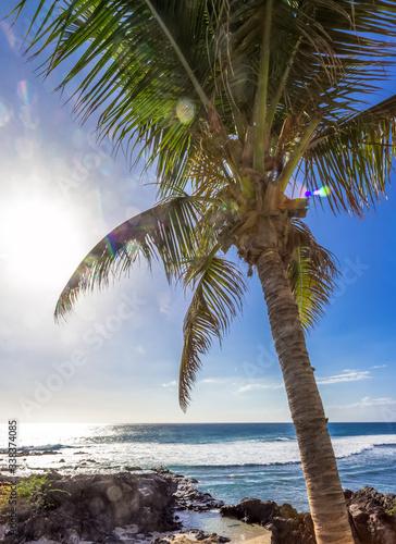 palm tree on the beach Wall mural