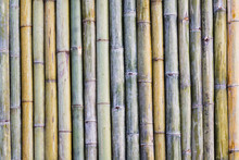 Soft Focus,Bamboo Fence Backgr...