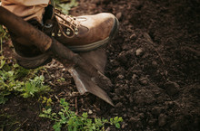 One Man's Foot In Shoes With Laces On Shovel Digging Fresh Dark Ground. Planting And Agricultural Time. Close Up And Cut View.