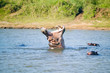 canvas print picture - Hippo opening mouth in a sequence of shots in the Greater St. Lucia Wetland Park World Heritage Site, St. Lucia, South Africa