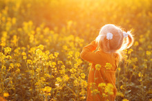 A Girl In A Yellow Field Looks At The Sunset