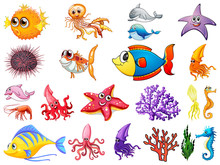 Large Set Of Sea Creatures On White Background