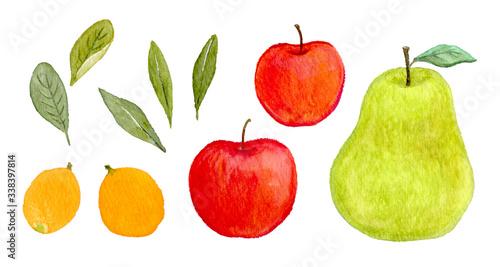 りんご 洋ナシ びわ 果物 フルーツ 水彩