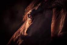 Pferdeportrait Mit In Sonne Glänzendem Auge Vor Dunklem Hintergrund Freigestellt
