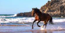 Lusitano Horse At The Beach