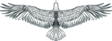 Symmetrical Eagle With Spread Wings Black And White Sketch American Vector Illustration