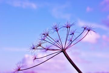 Niebo i suchy krzew