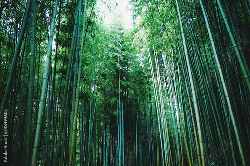 Tela Low Angle View Of Bamboos In Forest