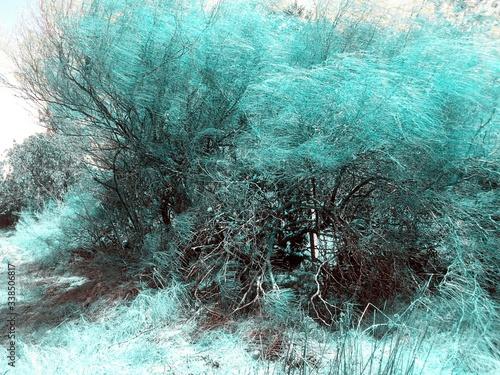 Fototapeta Windswept Tree On Field