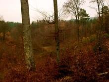 Las Na Wzniesieniu
