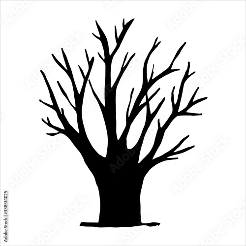 Fototapety, obrazy: tree vector. black silhouette on a white background