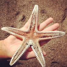 Directly Above Shot Of Hand Holding Starfish At Beach