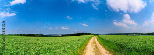 Fototapety, obrazy: Green field with plants and country road