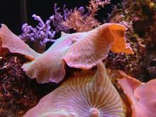 Close-up Of Mushroom Corals