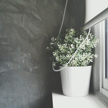 Potted Plant On Window Sill Against Wall