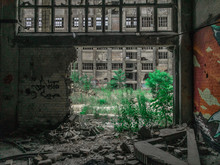 Interior Of An Abandoned Industrial Hall, Looking Through A Broken Wall Onto Trees Growing On The Outside