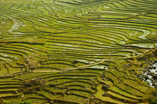 Traditional Teracced Field In Sapa Valley Norht Vietnam