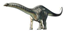 Apatosaurus Was A Sauropod Din...