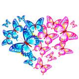 butterfly533